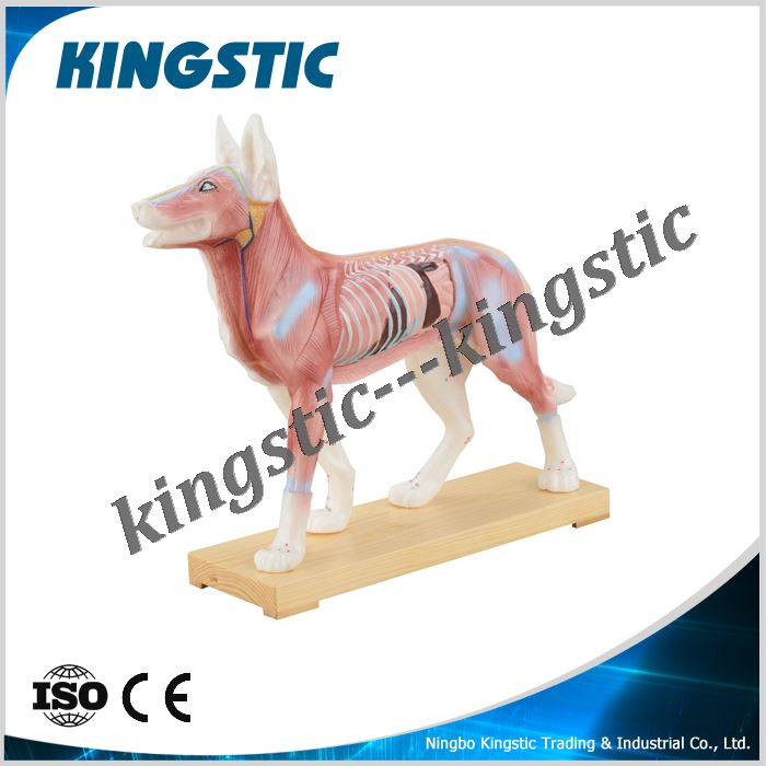 cbm-901a-dog-acupuncture-model